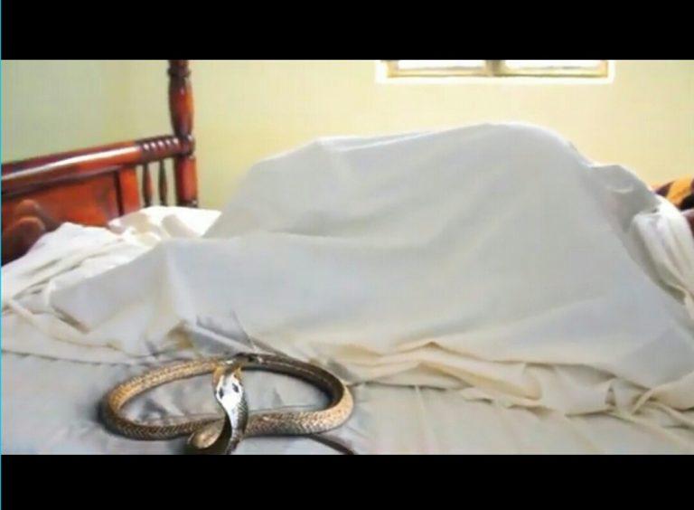 Video : I love my body - Musvo Zimbabwe
